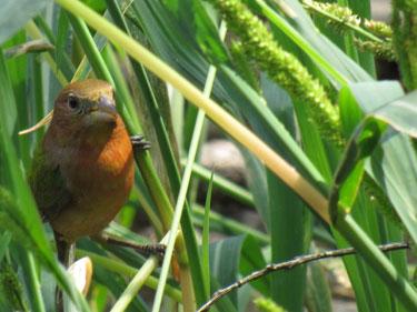 Paradise Pond In Port Aransas Tx Part Of The Birding